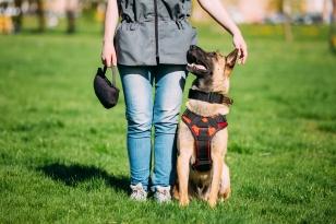 Dog training 1